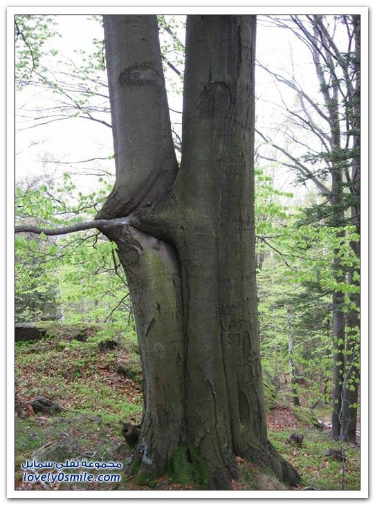 اغرب الاشجار في العالم سبحان الله Trees-22