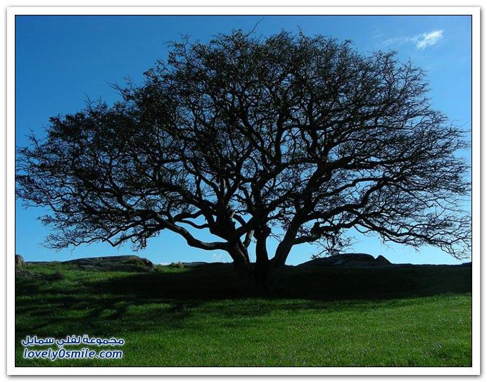اغرب الاشجار في العالم سبحان الله Trees-24