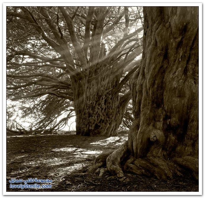 اغرب الاشجار في العالم سبحان الله Trees-26