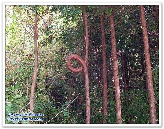 اغرب الاشجار في العالم سبحان الله Trees-31