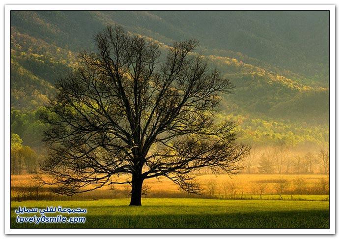 واغرب الأشجار ، صور أغرب أجمل الأشجار