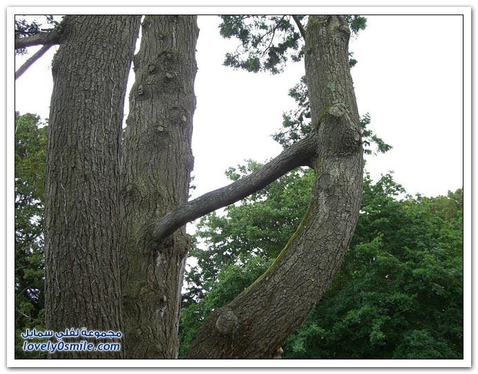 صور لأجمل وأغرب الأشجار في العالم