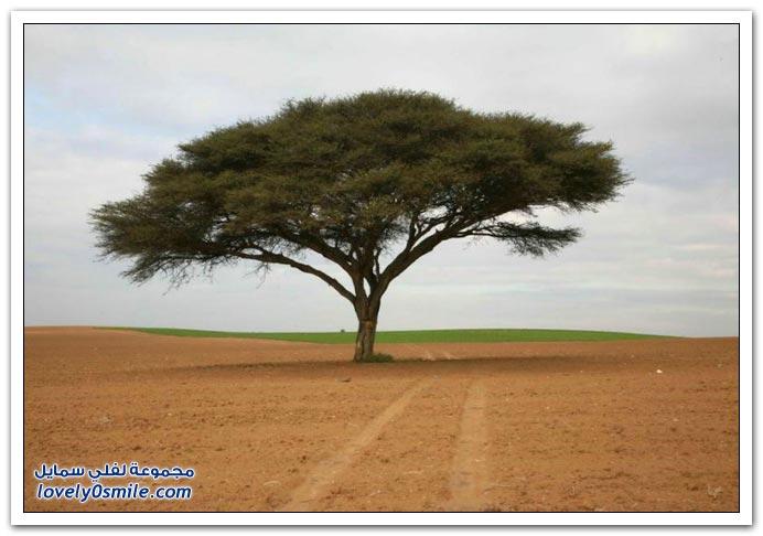 لأجمل وأغرب الأشجار العالم.......سبحان الله