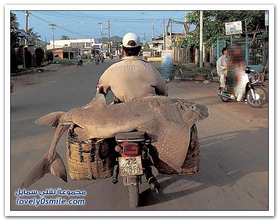 صور أشكال النقل على الدباب