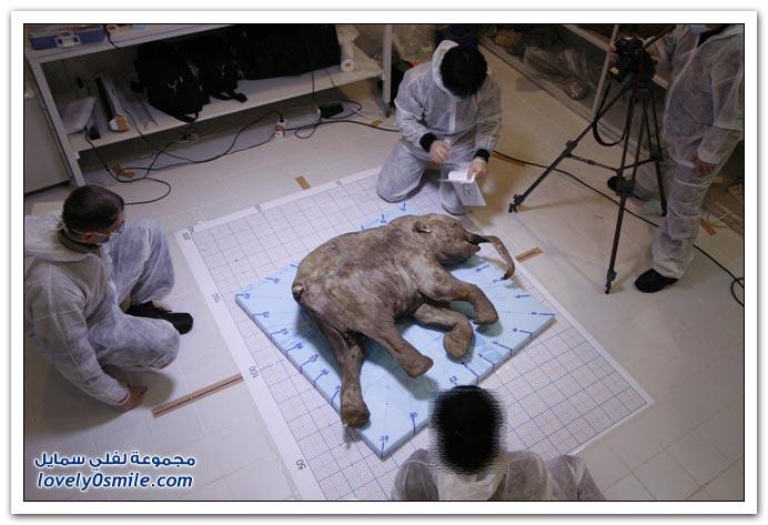 صور: اليوم لعالمي للحيوان 2009