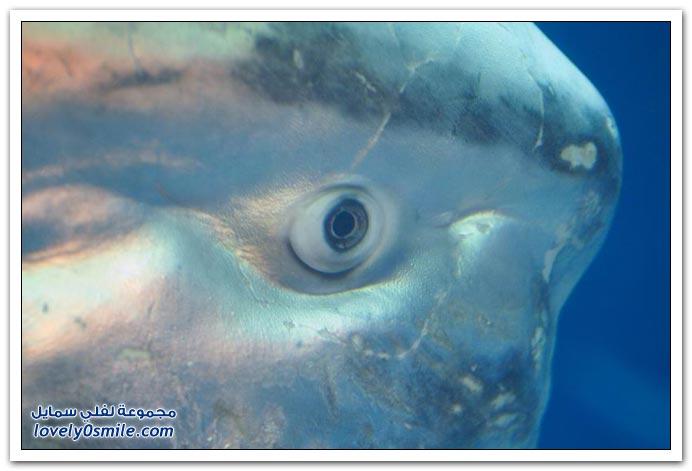 صور سمكة غريبة