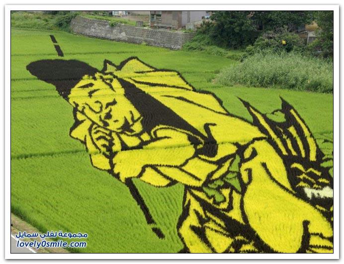 صور في حقول الأرز