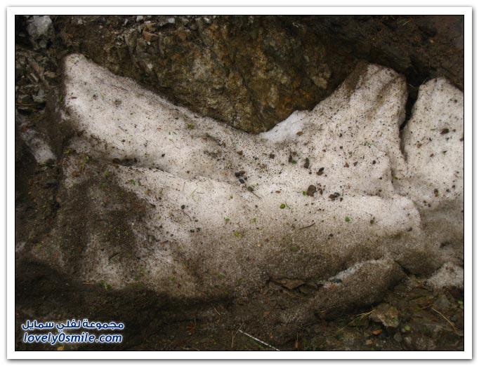 صور ثلوج الهدا 6-1-1431هـ