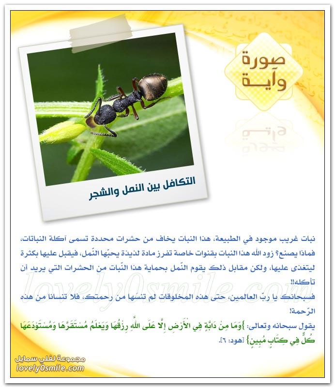 التكافل بين النمل والشجر + نجم الشِعرى