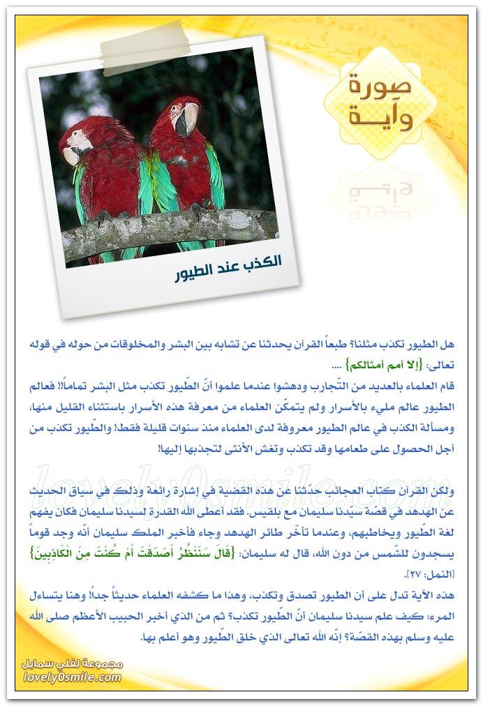 الكذب عند الطيور + كثرة الخطا إلى المساجد
