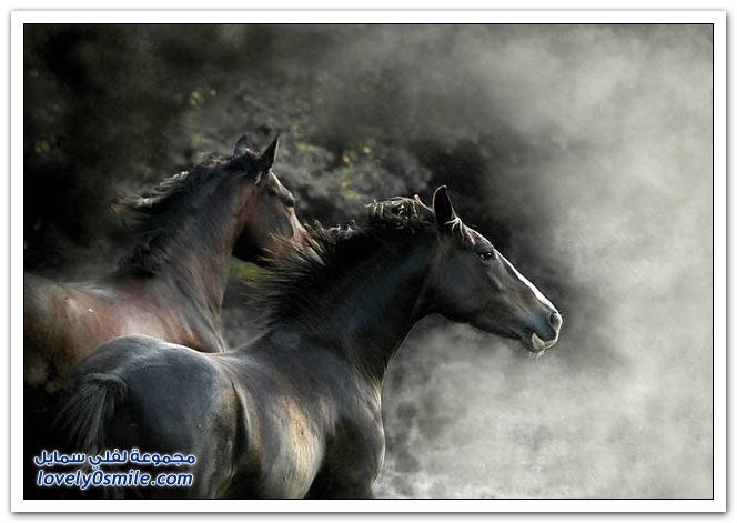 الـبـنـت مـــن رجـالـهــا والـخـيــل مــــن خـيـالـهـا horses-011.jpg