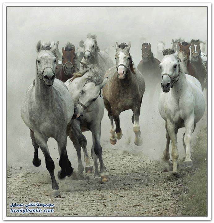 صور من عالم الخيول ج1