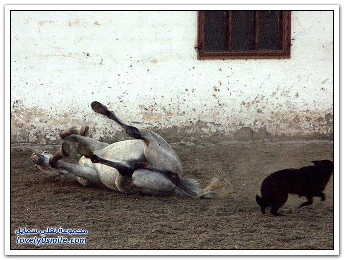 صور من عالم الخيول ج2