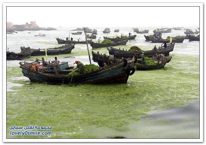صور هجوم من الطحالب