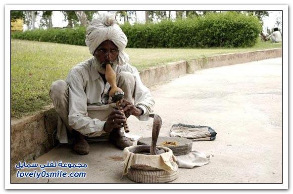 صور مهرجان الأفاعي في الهند