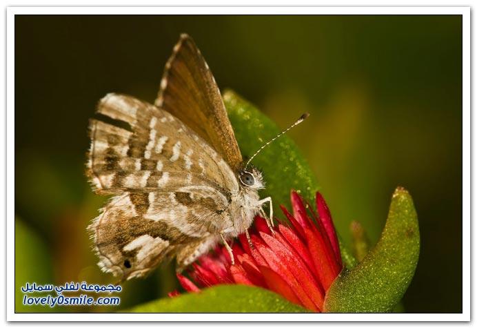 صور مكبرة لبعض الحشرات والمفصليات