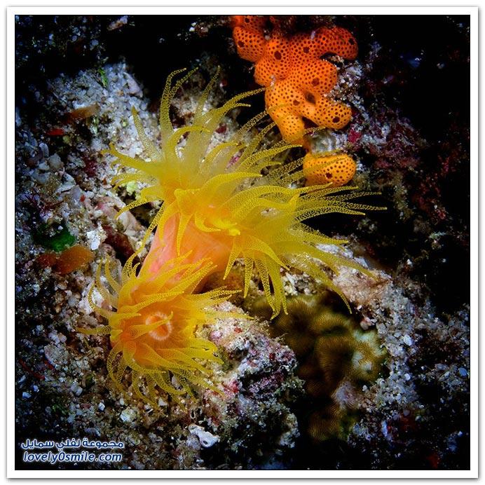 صور من أعماق البحار