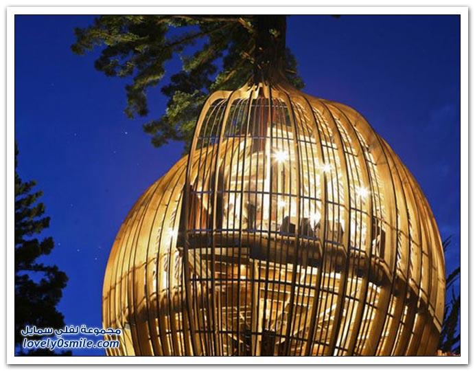 صور لمطعم على شجرة