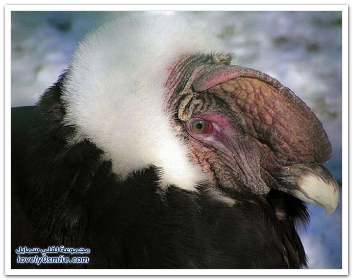 صور لحيوانات رضيعة