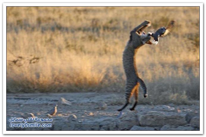 صور: محاولة صيد فاشلة