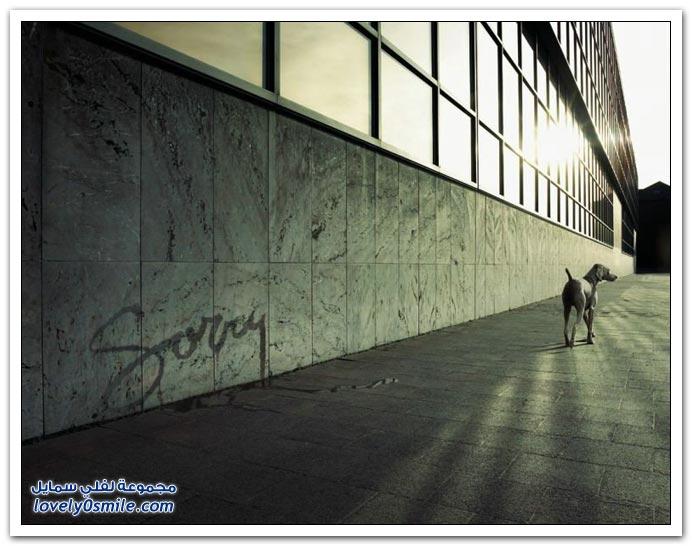 صور: إبداع في تركيب الصور