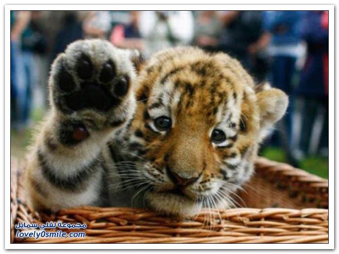 صور: حتى الحيوانات ترحب