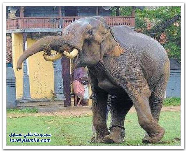 صور: الهروب من الفيل
