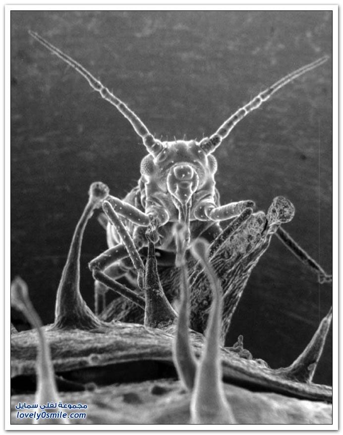 حشرات تحت المجهر
