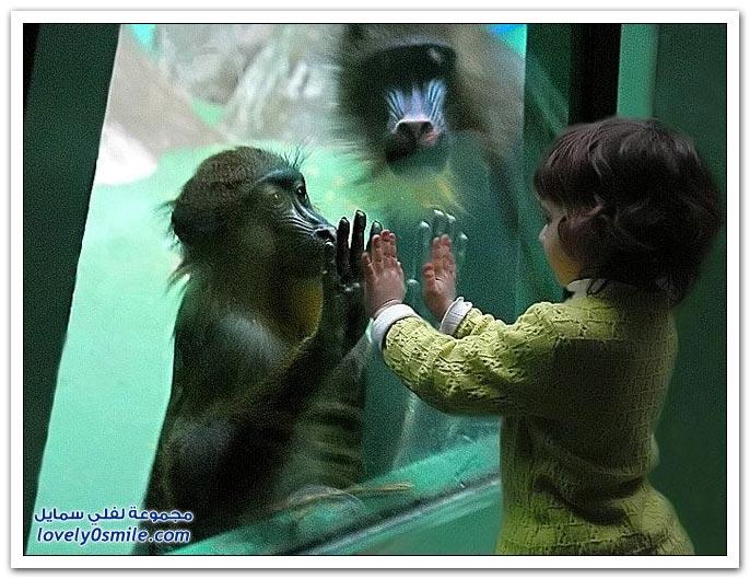 صور من عالم الحيوان: القرود ج1