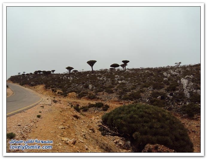 صور من جزيرة سقطرى