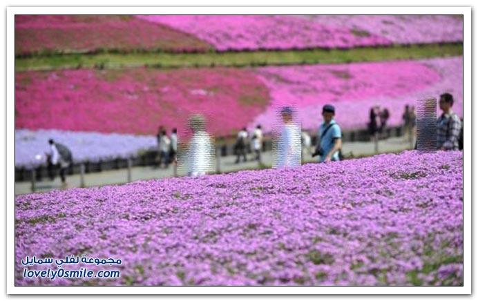 صور حول العالم لشهر مايو 2010