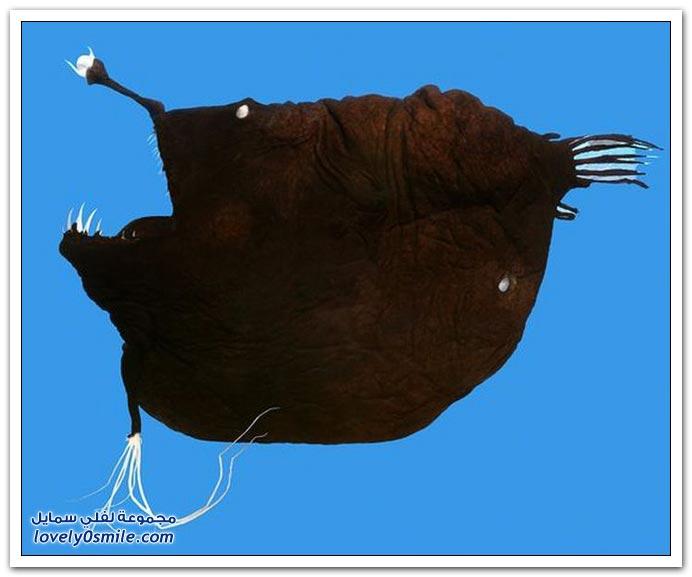 صور: أغرب حادث جمال + صور أسماك عجيبة وغريبة +  اختراع بدل الكفر وقت الزنجه