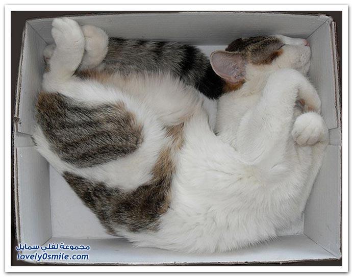الطريقة المريحة للنوم عند القطط