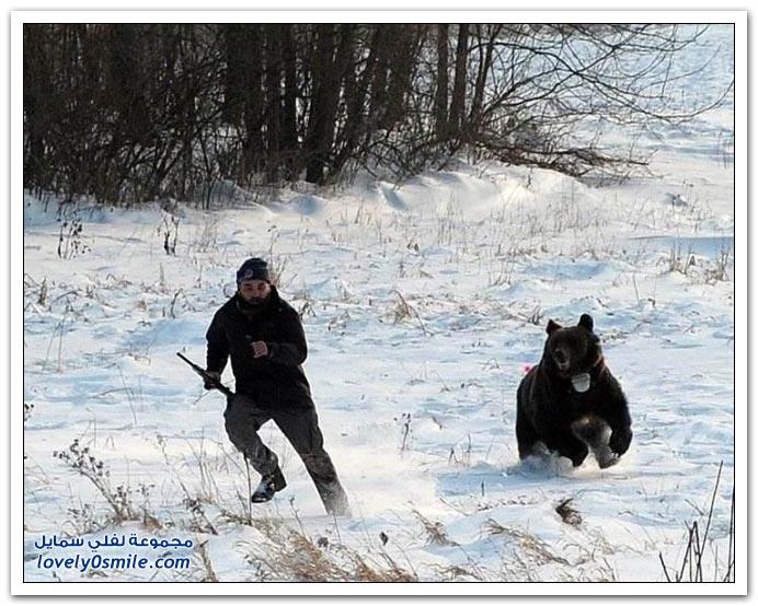 صور الهروب من الدب