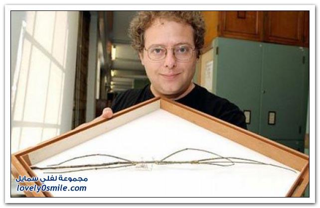 صور لأطول حشرة في العالم