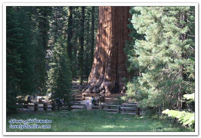 صور لأغرب الأشجار على وجه الأرض