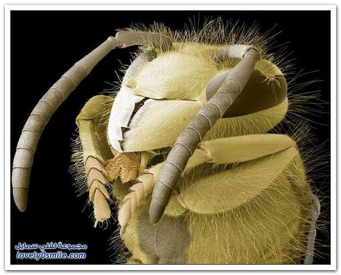 صور بعض الحشرات بالميكروسكوب