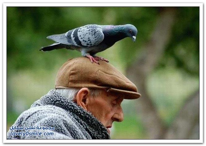 جميلة للحمام Pigeons-04.jpg