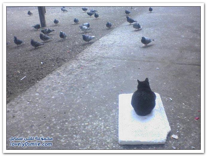 جميلة للحمام Pigeons-18.jpg