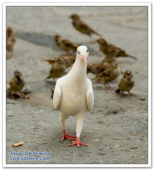 صور من طيور الحمام حول العالم