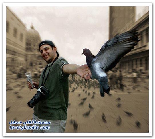 جميلة للحمام Pigeons-65.jpg