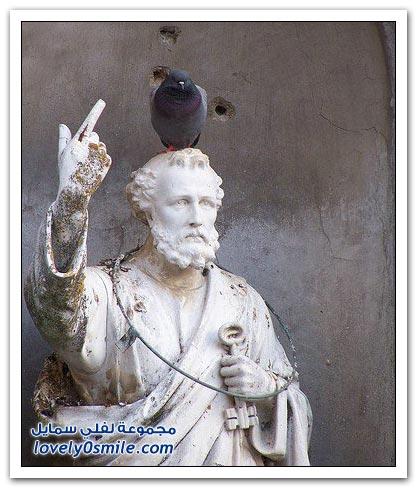 جميلة للحمام Pigeons-66.jpg