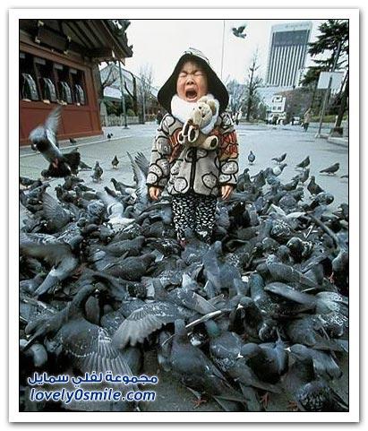 جميلة للحمام Pigeons-69.jpg