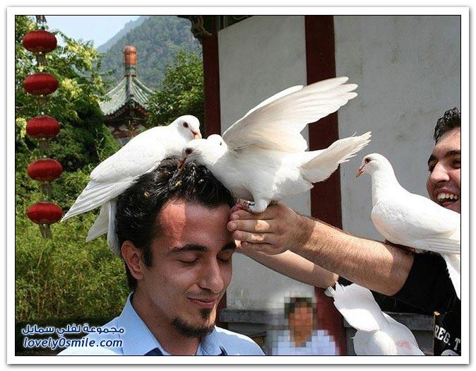 جميلة للحمام Pigeons-77.jpg