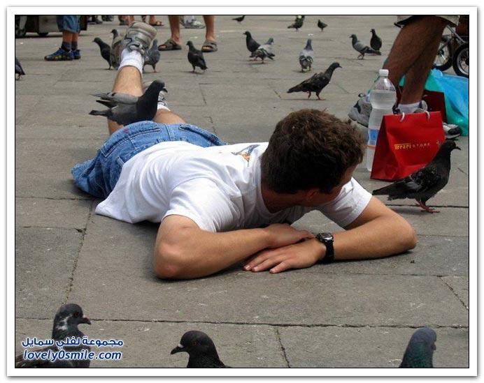 جميلة للحمام Pigeons-80.jpg