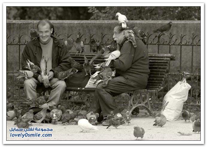 جميلة للحمام Pigeons-84.jpg