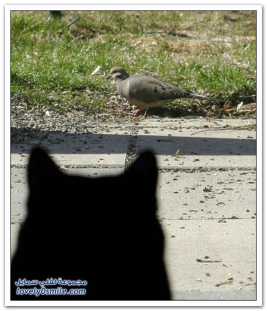 جميلة للحمام Pigeons-90.jpg