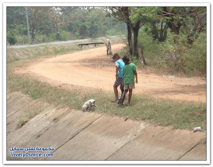مشهد رائع في تكاتف الطفلين لمساعدة الكلب