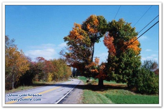 أشجار غريبة وجميلة