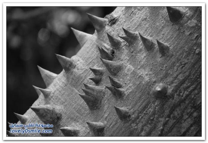 صور لأكثر الأشجار خطورة